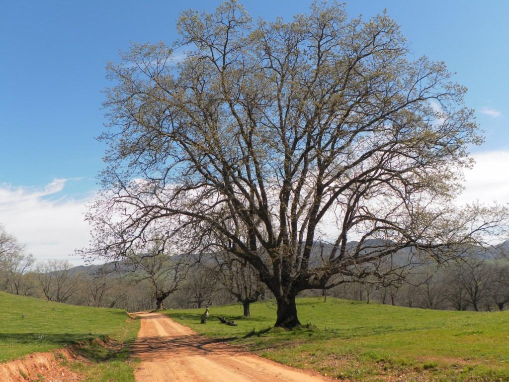 El árbol y sus ramitas